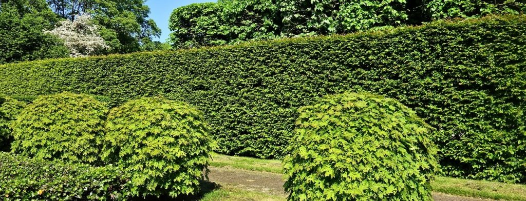 natural fence